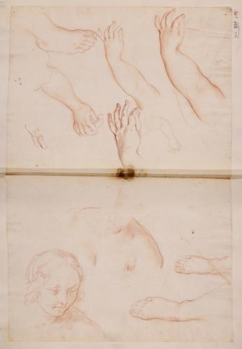 Estudio de pies, brazos, manos, hombros y cabeza femeninos