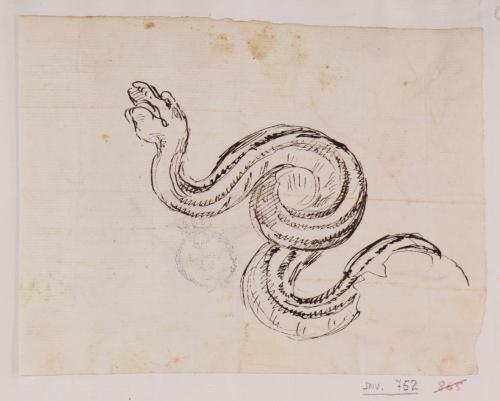Estudio de serpiente