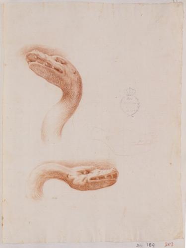 Estudio de dos cabezas de serpiente y ligero apunte de otra