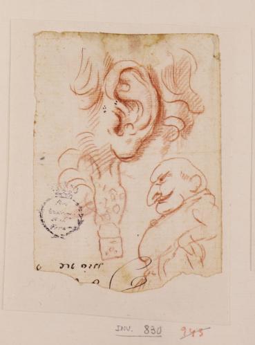 Estudio de oreja y caricatura masculina de perfil hacia la izquierda