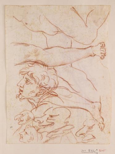 Cinco caricaturas y varios estudios de piernas