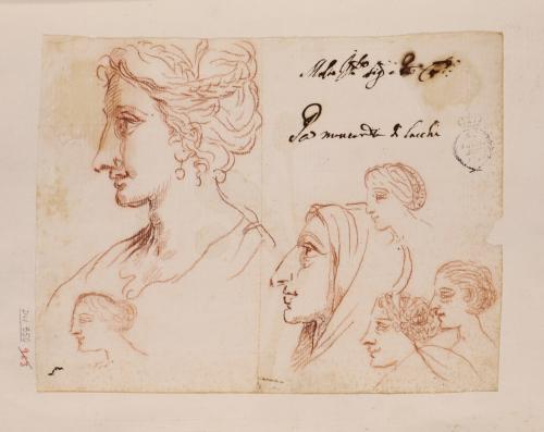 Un estudio y seis apuntes de cabezas femeninas de perfil hacia la izquierda