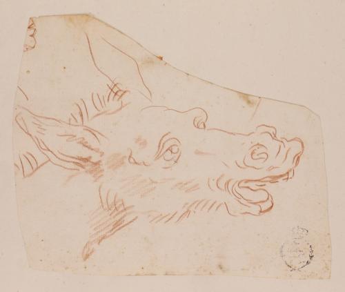 Caricatura de cabeza de asno hacia la derecha