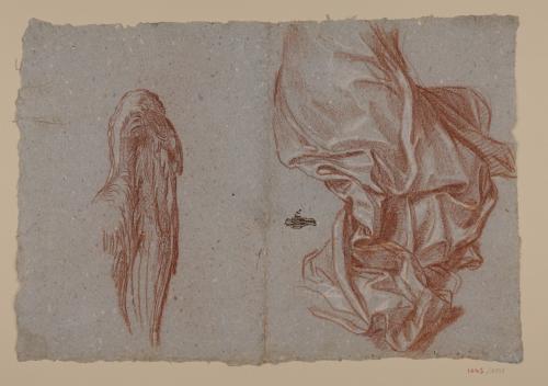 Estudios de ala y ropaje