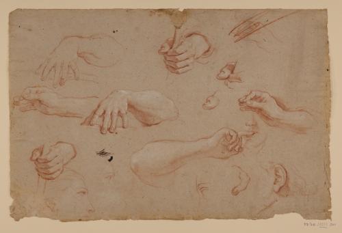 Estudio de manos, brazos, dedos, caras, oreja y ojos