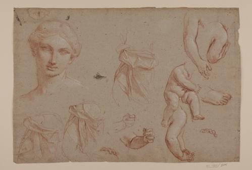 Estudio de cabeza femenina, de torso femenino, y de torso, manos y pies de niño