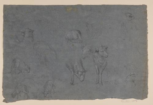Estudio de corderos y ligero apunte de cabra