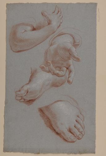 Estudio de brazo, mano y pies para la Aparición de la Virgen a San Francisco de Sales