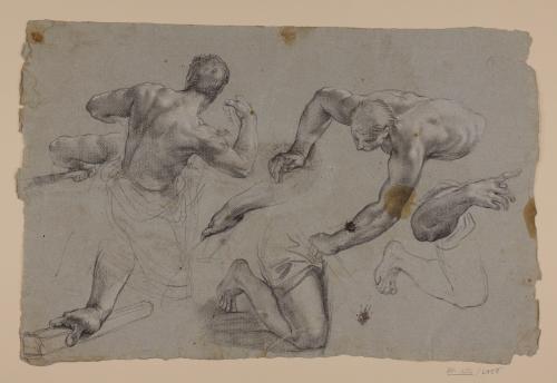 Estudios de torsos, brazos y piernas masculinas