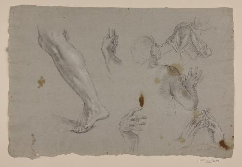 Estudio de torso, piernas y manos masculinos
