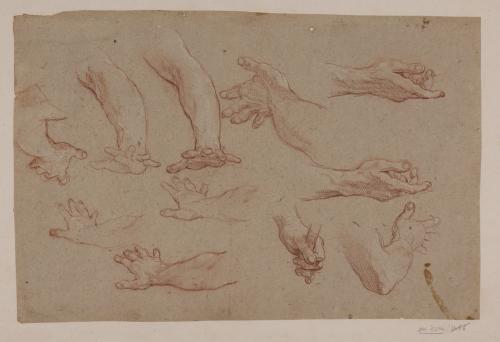 Estudios de brazo y manos