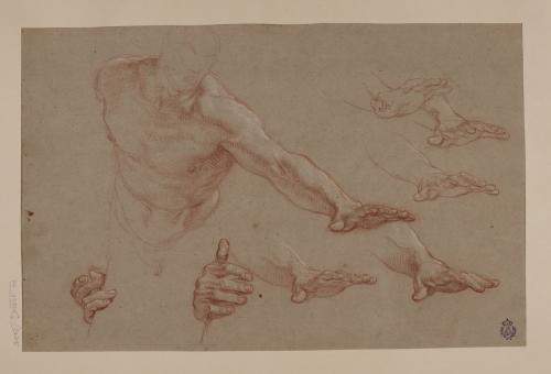 Estudios de torso y manos