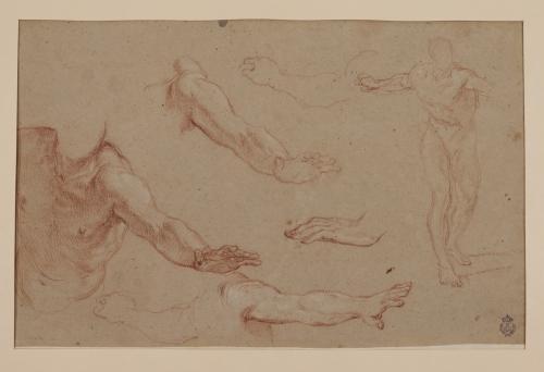 Estudio de figura, torso, brazos, y manos masculinas.