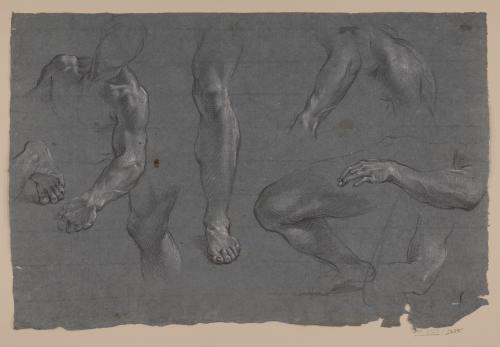 Estudio de torso, piernas y brazos masculinos