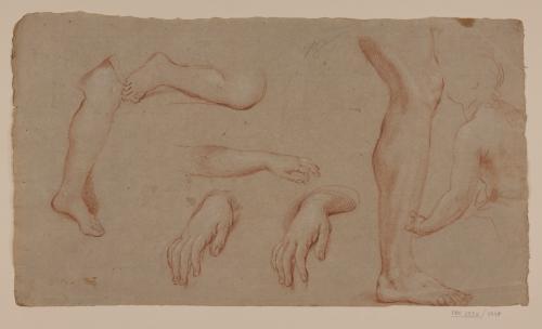 Estudio de pie, manos y pierna y apunte de torso