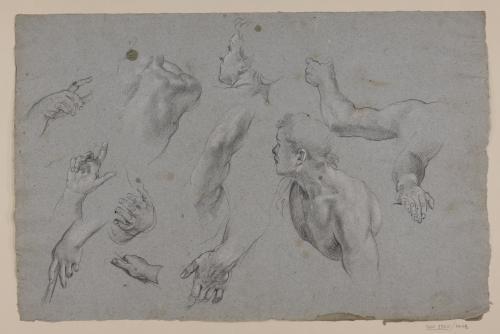 Estudio de torsos y manos masculinas