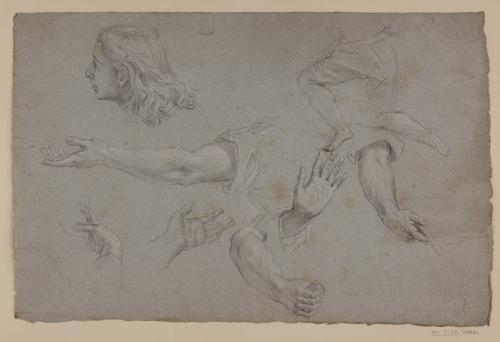 Estudio de cabeza juvenil, parte inferior de una figura, brazos y manos