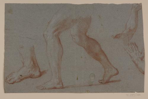 Estudios de piernas, pie, brazo y mano.
