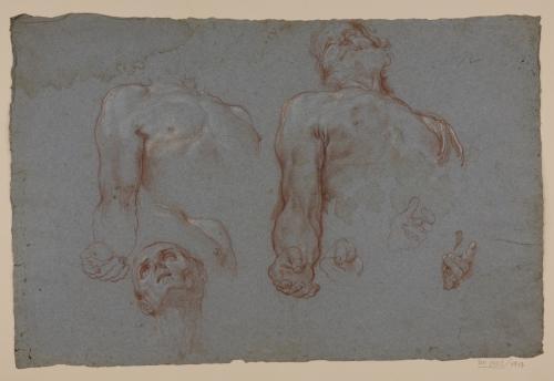 Estudio de torso, cabeza y manos masculinas