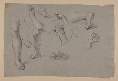 Estudio de manos, brazos y piernas
