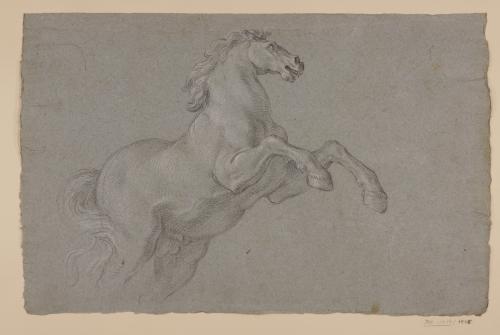 Estudio de caballo encabritado