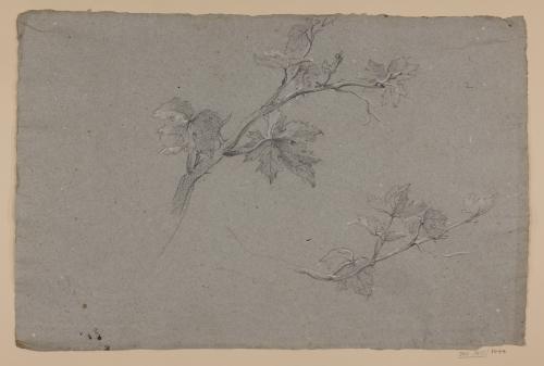 Estudio de ramas con hojas