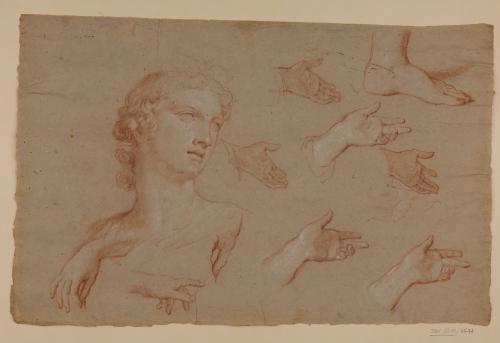 Estudio de cabeza (Apolo de Belvedere), pie y manos