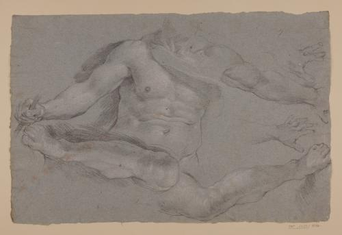 Estudio de torso, piernas y mano masculinos