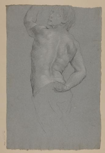 Estudio de torso masculino de espaldas