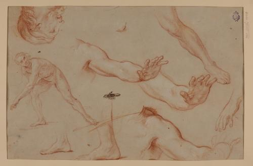 Estudio de desnudo, cabeza, brazo, pie, pierna y hombro masculinos