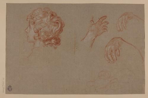 Estudio de cabeza de joven, manos y ligero apunte de figura