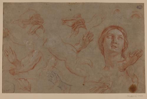 Estudio de cabeza femenina, manos, torsos masculinos y figura infantil