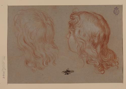Estudio de cabellera de joven