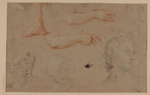 Estudio de cabeza del Apolo Belvedere, brazo y pie