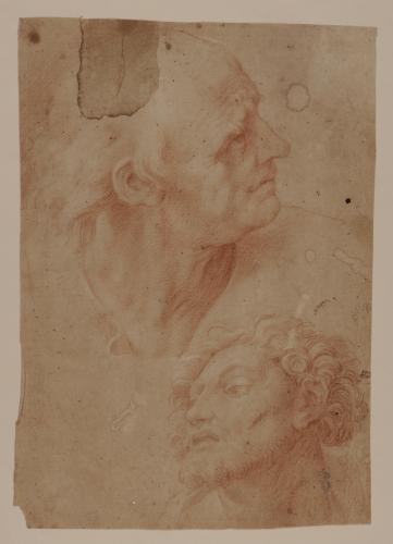 Estudio de dos cabezas masculinas