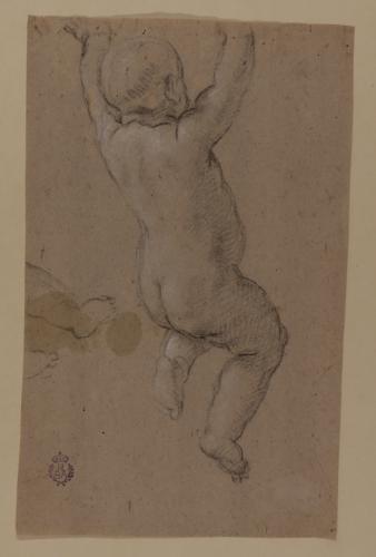Estudio de desnudo infantil