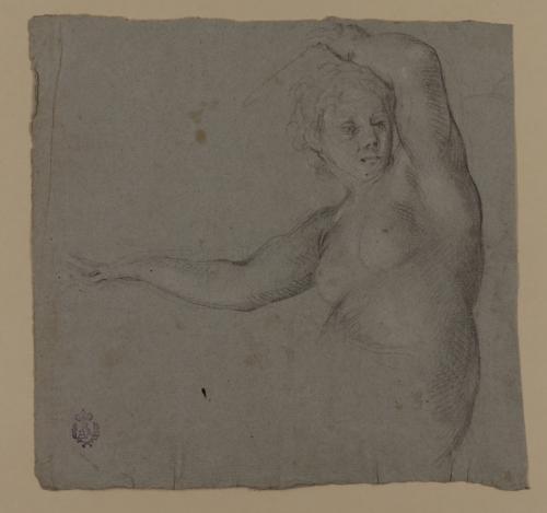 Estudio de media figura femenina desnuda