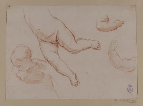 Estudio de torso, cuerpo, y brazo infantiles