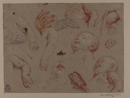 Estudio de brazos, manos y cabezas infantiles