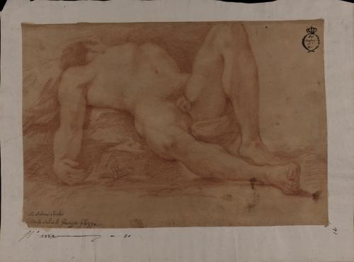 Estudio de modelo masculino desnudo tumbado