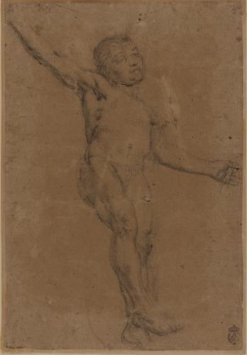 Estudio de modelo masculino desnudo