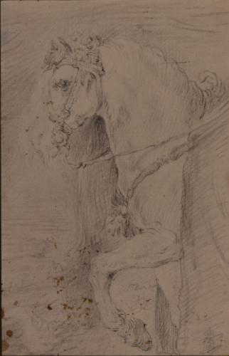 Estudio de la cabeza y mano delantera del caballo de Isabel de Borbón