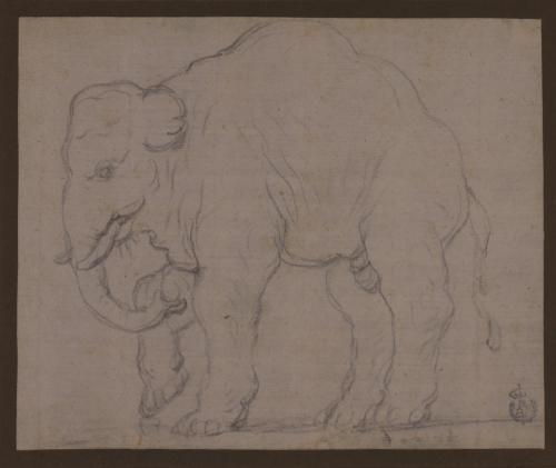 Estudio de elefante asiático de perfil