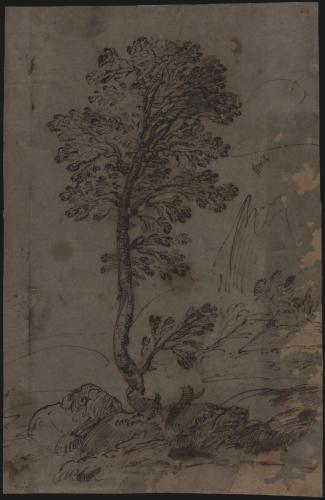 Estudio de árbol entre peñas
