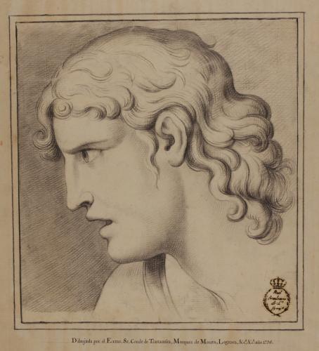 Estudio de cabeza escultura clásica de perfil