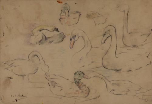 Estudio de patos y cisnes