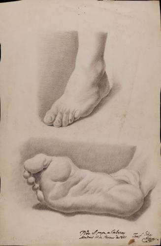 Estudio de pie y de planta de pie