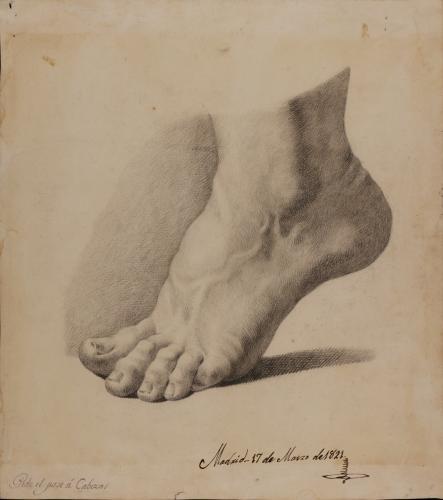 Estudio de pie izquierdo de puntillas