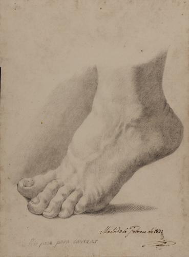 Estudio de pie izquierdo de puntillas de perfil