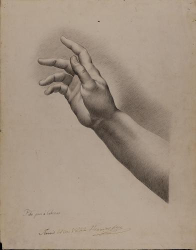 Estudio de mano y antebrazo alzado